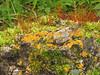 Lichen and moss garden - Clyde, 9 km east, Alberta