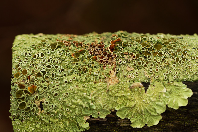 Lichens growing on a bench