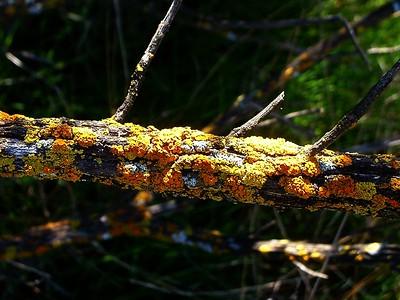 Mosses, Liverworts, Ferns & Lichens