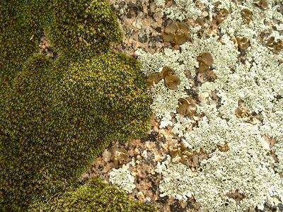 moss & lichen. Lakeview Mountains, 01 Nov 2003