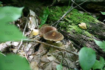 Unknown fungi.  If you can identify this fungi, please contact me at S.N.A.P@comcast.net.  Please note there is a dot between S, N, A & P.