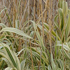 Close up photograph of plants at the NRCS PMC in Knox City, Texas.