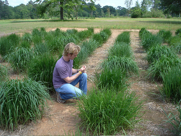 SFASU graduate student, Paul Gray, collecting tissue samples from the Rust Resistant Indiangrass Study at the East Texas PMC.