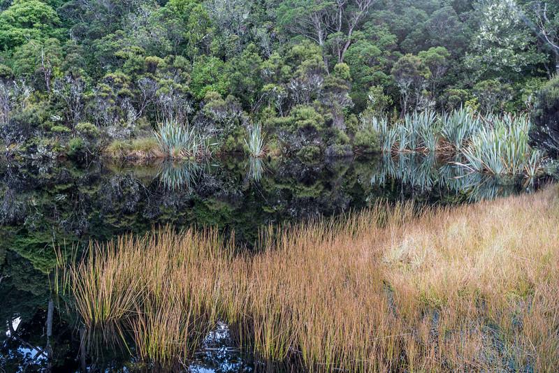 Spike rush (Eleocharis acuta). Lake Wilkie, Catlins