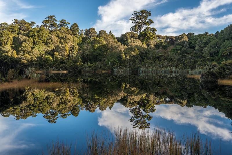 Lake Wilkie, Catlins. Spike rush (Eleocharis acuta) in the foreground