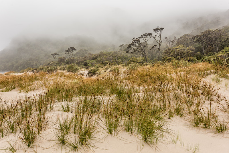 Pīngao (Ficinia spiralis) covered sand-dunes at the mouth of the Big River, Fiordland National Park.