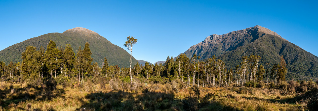 Mixed kahikatea and rimu forest in the lower Turnbull River plains. The Browning Range, Turnbull Valley and Selborne Range in the backdrop