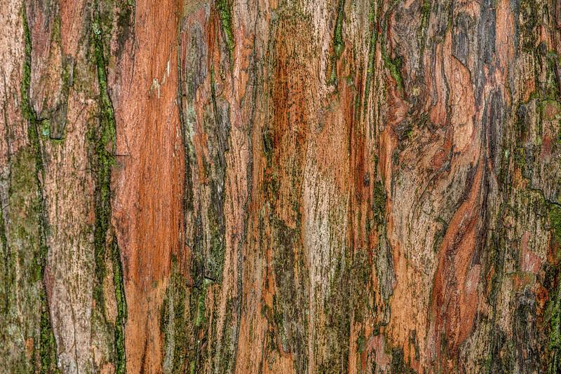 Big Tree, Peel Forest. Tōtara bark (Podocarpus totara)