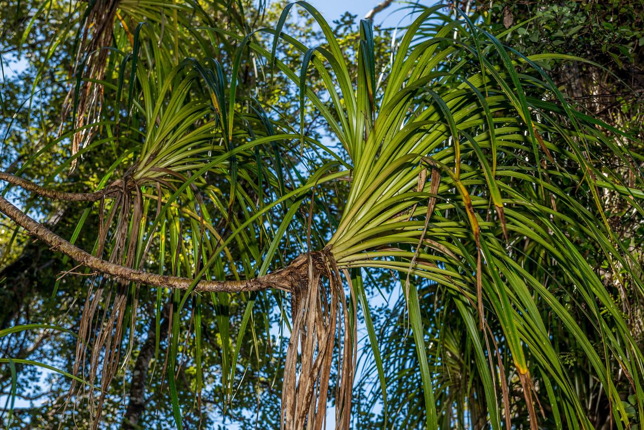 Plantes de fous ! forêts tempérées exotiques Abel%20Tasman%200585-X2