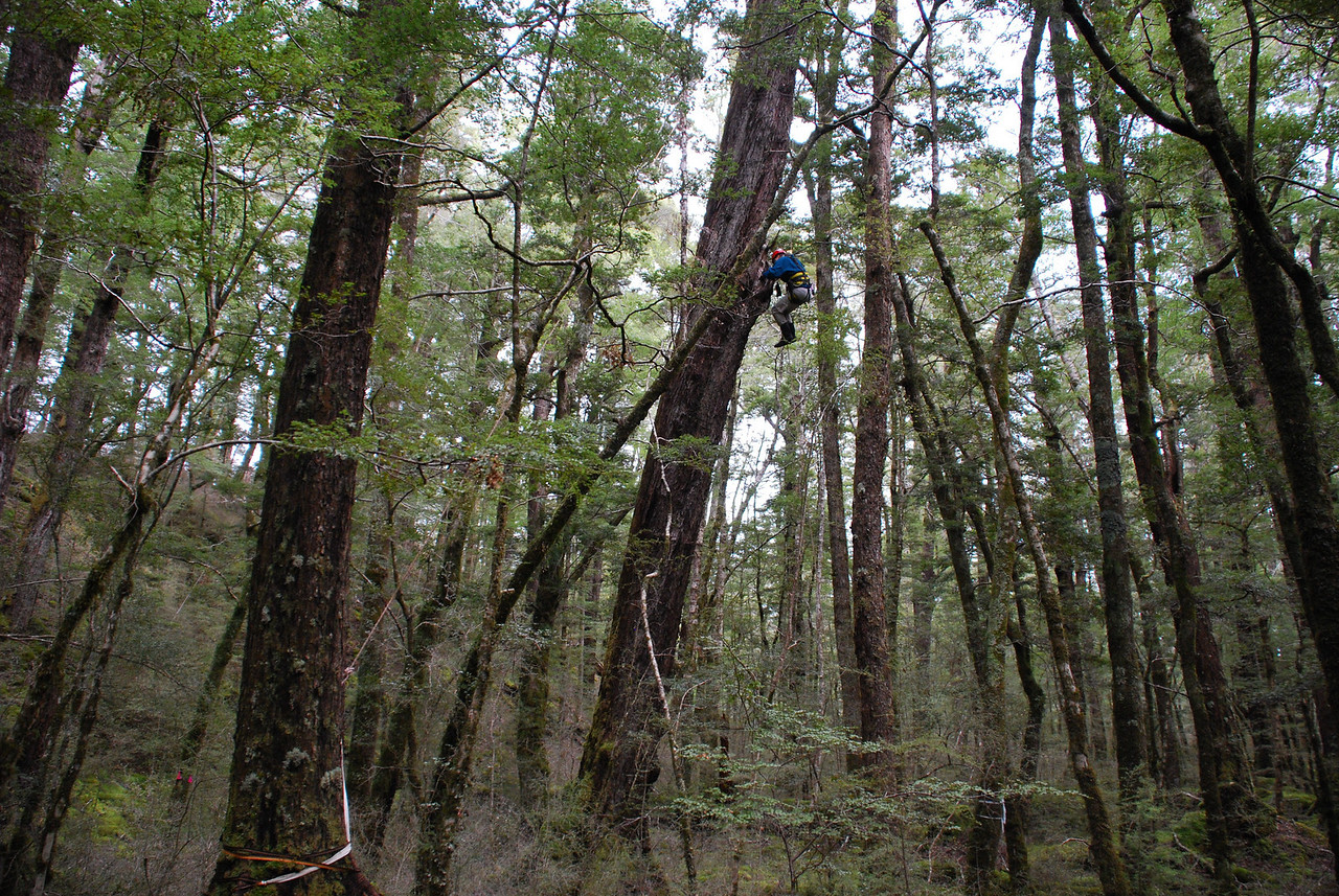 Beech forest, Eglinton Valley, Fiordland
