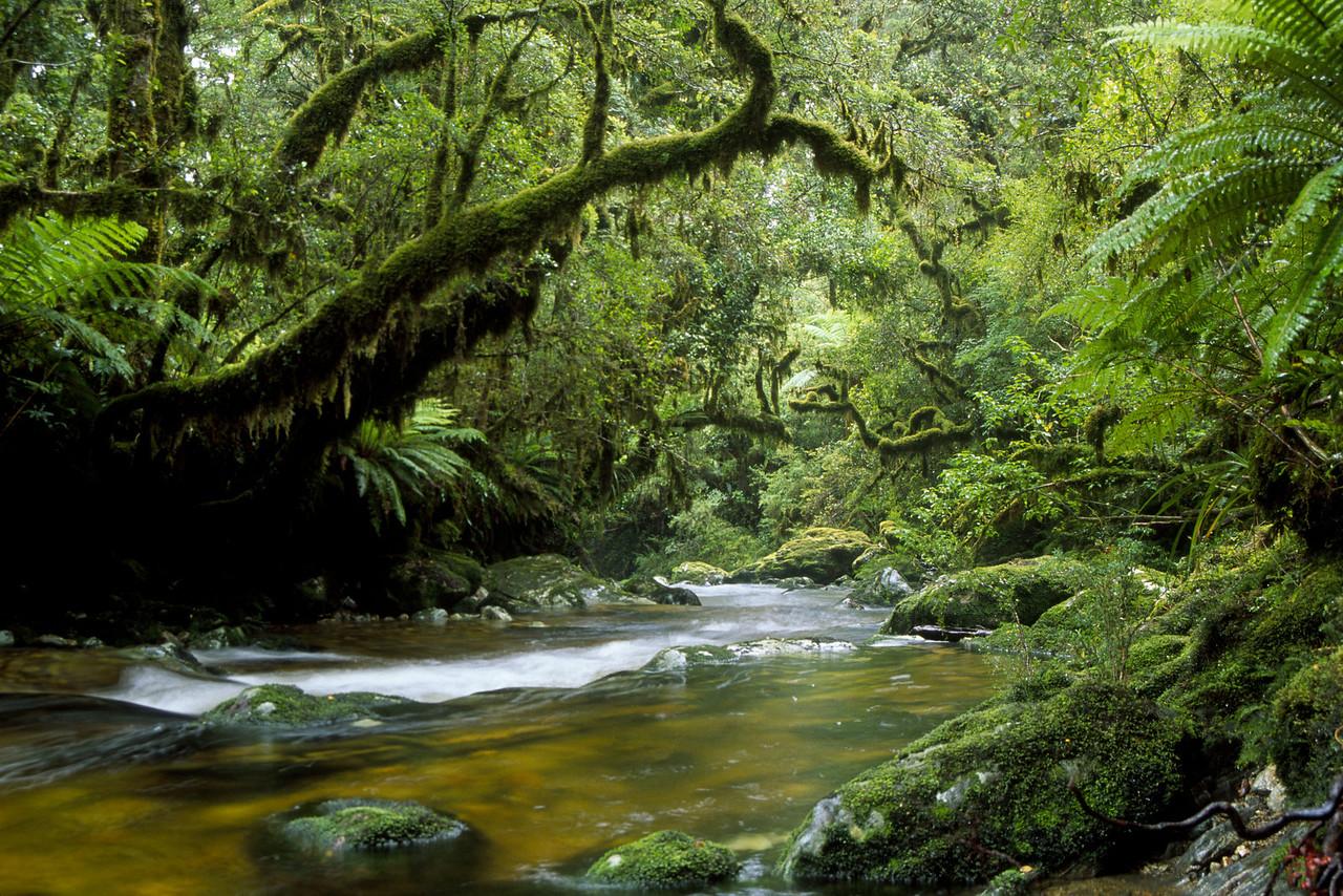 Katherine Burn, George Sound Track, Fiordland