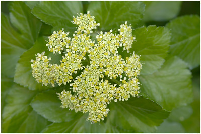 Alexanders, Titchwell, Norfolk, United Kingdom, 28 March 2017