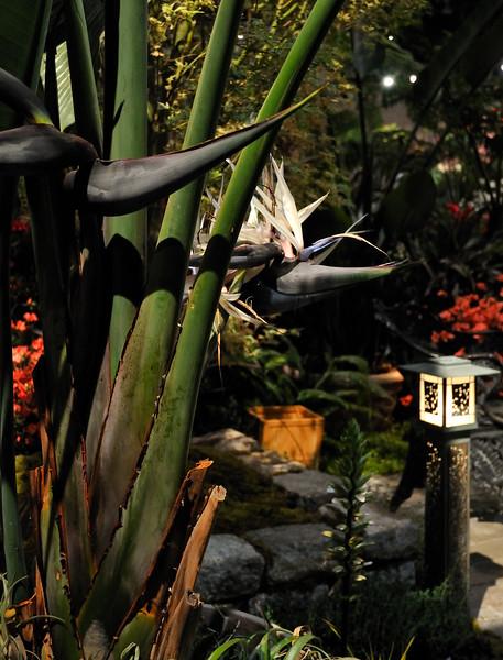 White Bird of Paradise - 2010 Philadelphia Flower Show
