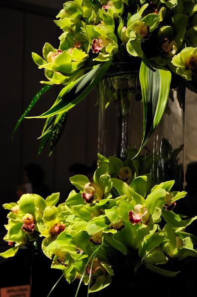 Green orchids - 2010 Philadelphia Flower Show