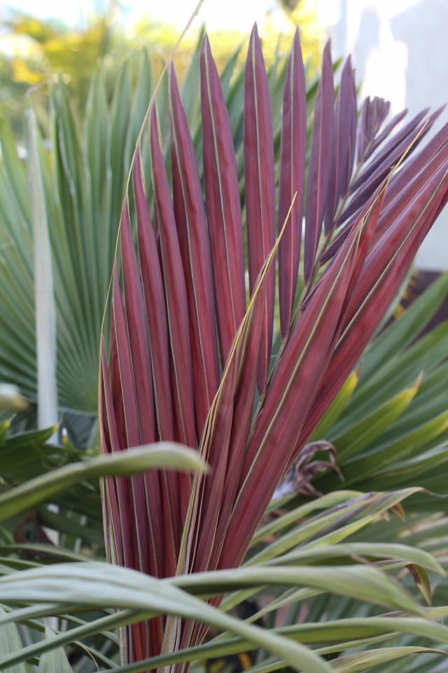Plant and Garden Photos 2013