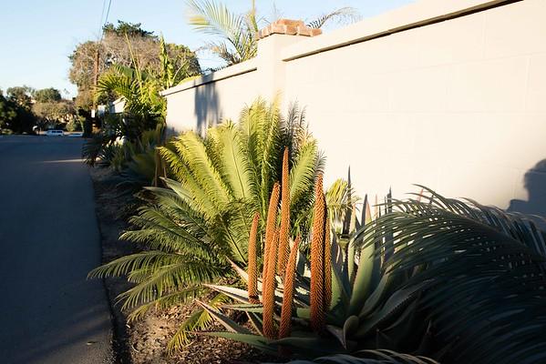 Plant and Garden Photos 2016