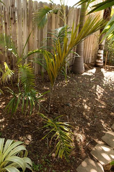 Southern California Palm Society Meeting - Fallbrook / Dunn Garden 3-19-2016