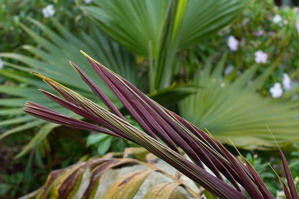 Plant and Garden photos 2011
