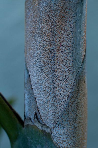 Cycads, Palms & Bromeliads in Autumn 10-13-2012