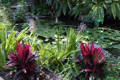 Tropical pond at San Diego (Quail) Botanical Garden 9/22/2015