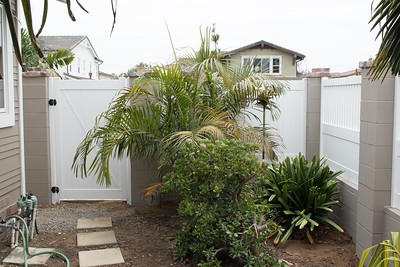 Dypsis lutescens inside new wall/fence.