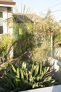 Peeking through where vinyl fence will be at inner garden.