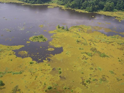 Toledo Bend, Texas. Upper Reservoir. Aerial photo showing Giant Salvinia coverage.