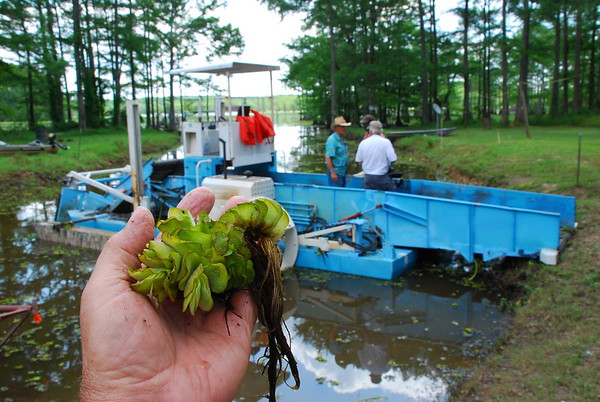 Salvinia harvester. Texas.