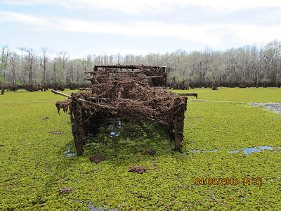 Giant Salvinia, Caddo Lake, Texas, duck blind.