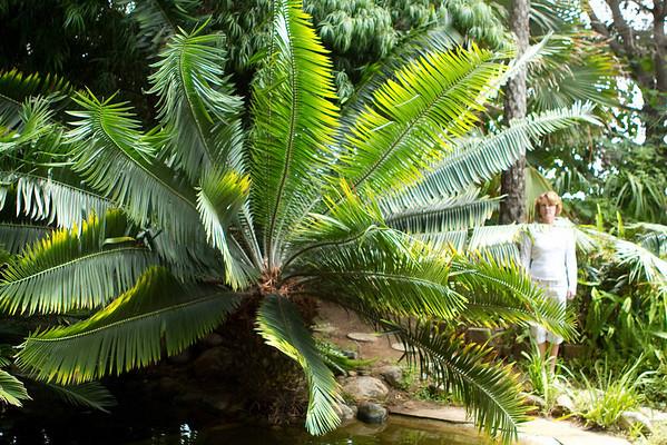 Leucadia Private Garden 7-11-10