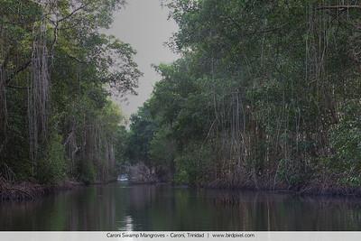Caroni Swamp Mangroves - Caroni, Trinidad