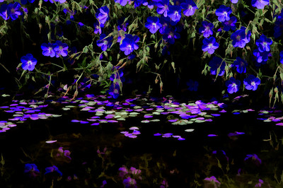 Flowers, floating petals and reflections
