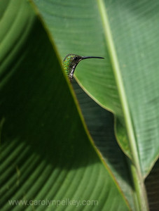 Peeking out of the fronds