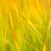 Gras, Birkensee, Moorsee, Naturpark Schönbuch, Baden-Württemberg, Deutschland