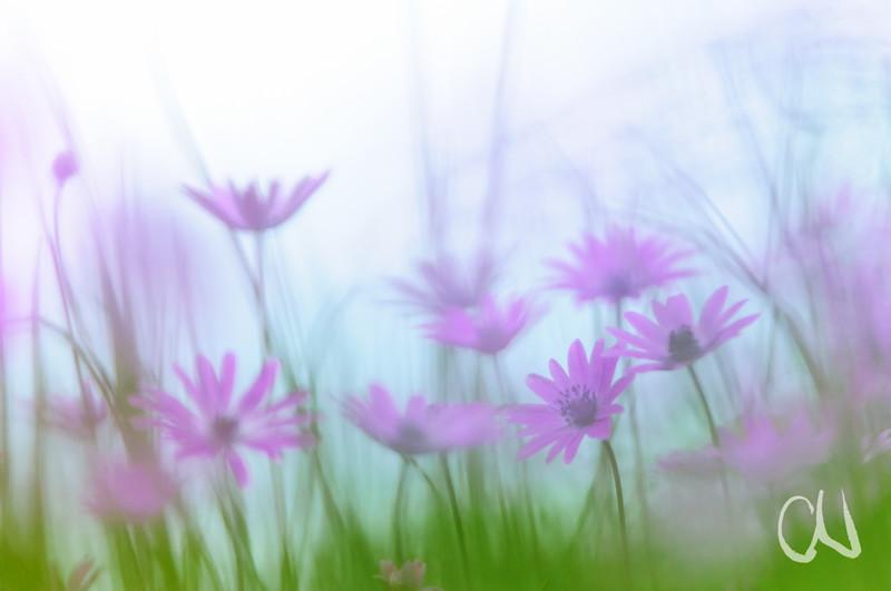 Blüten-Pastell