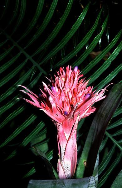 Sydney Botanic Garden - 4