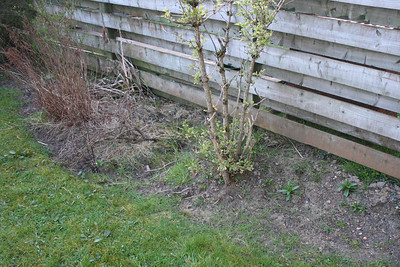 Project Garden 2012 - Before