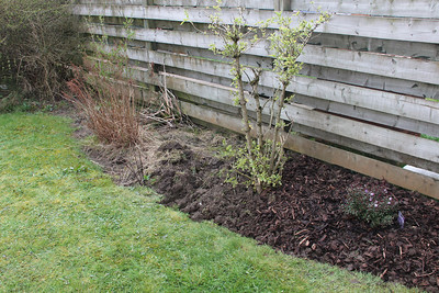 Project Garden 2012 - Part way through