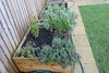 Herb Bed.<br /> 24 January 2015