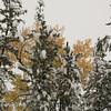 First Snow_SS4860