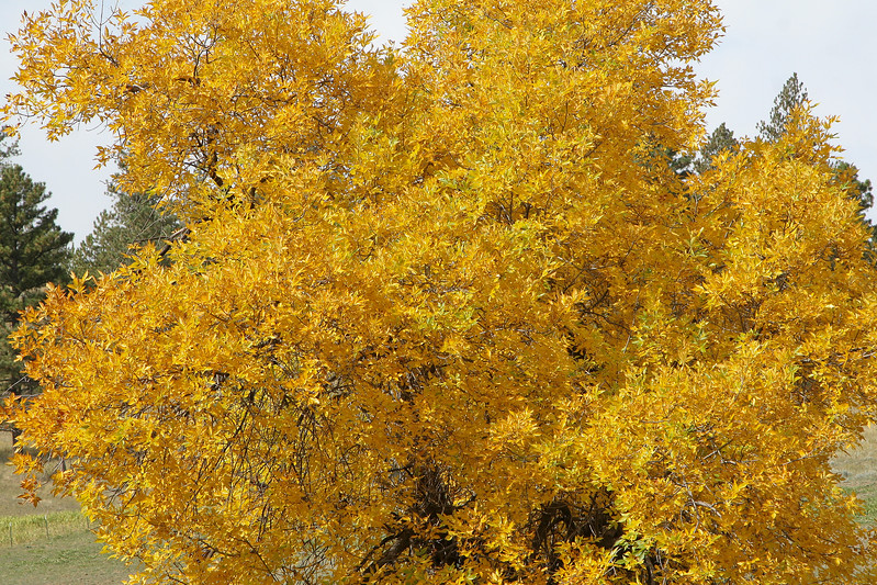 Fall Color_SS4090
