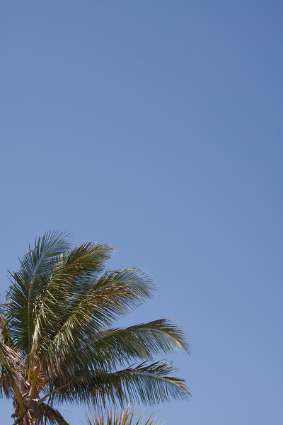 Vertical shot of palm tree against a blue sky