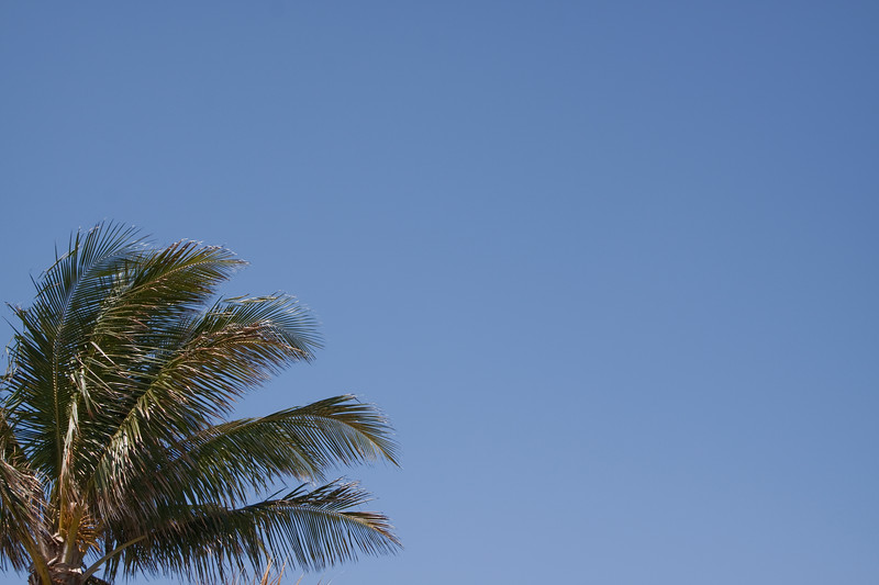 Horizontal shot of coconut palm against a blue sky
