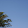 Horizontal shot of coconut palm against a blue sky