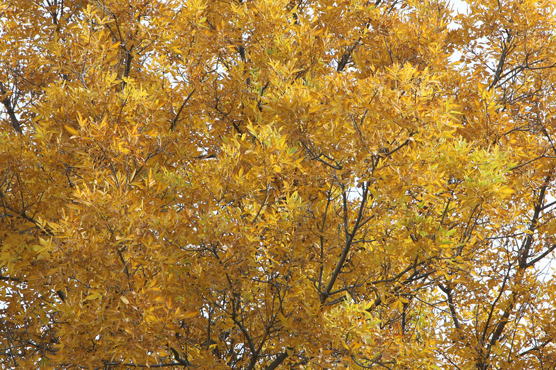Fall Color_SS4070