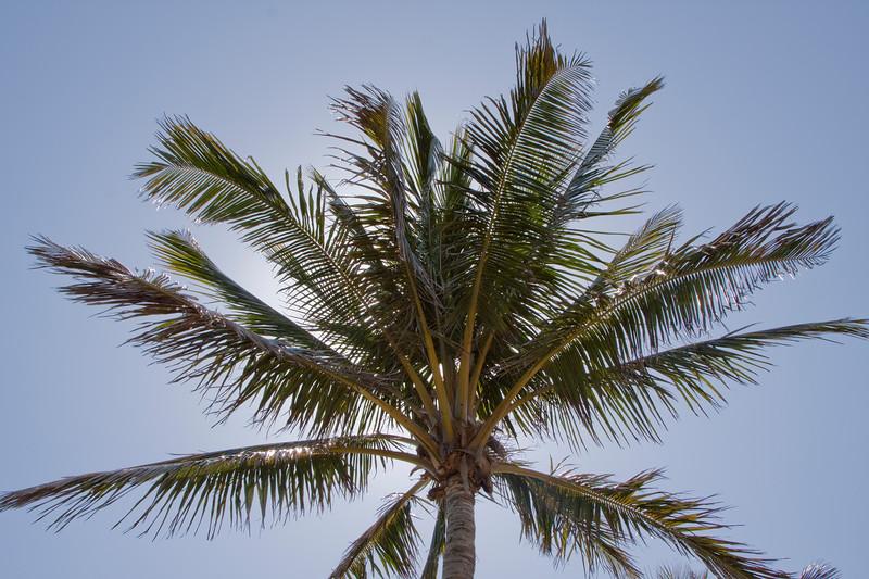 Coconut tree against sunlit sky