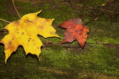 Fall Logs