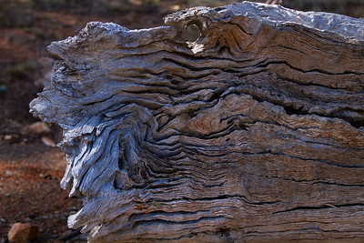 A piece of bark with a face