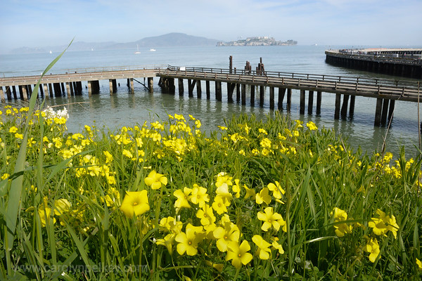 Flowers Color the Bay