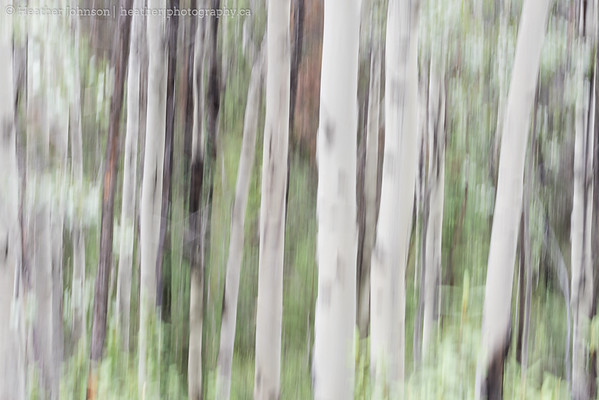 Arbutus Blur